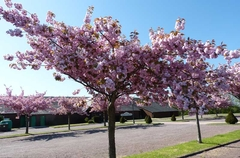 Le printemps à Moyaux :